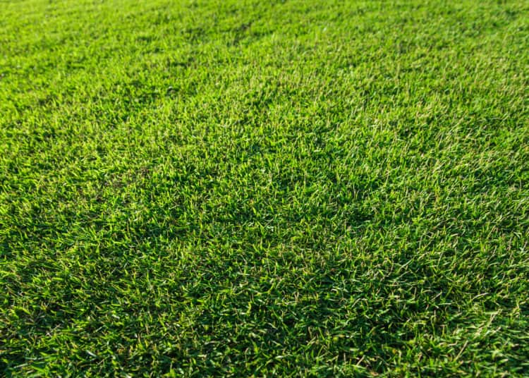 Clean empty football grass field