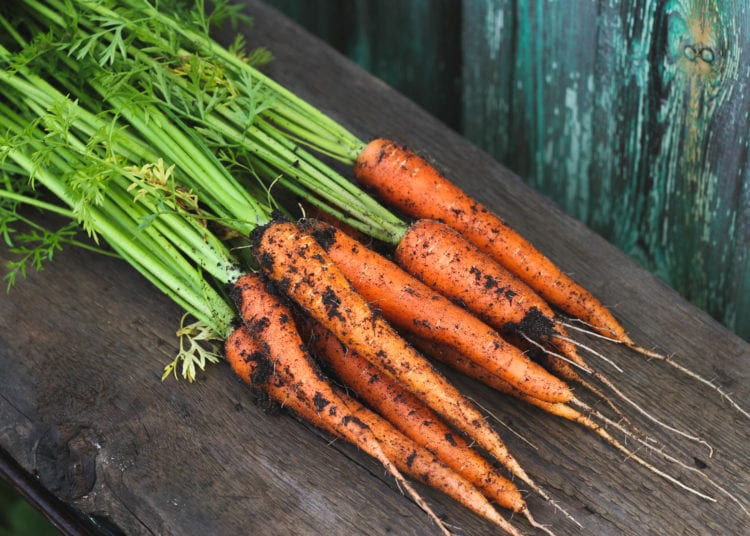 Young garden carrot with leaves and in the ground on a wooden background. Autumn harvest.