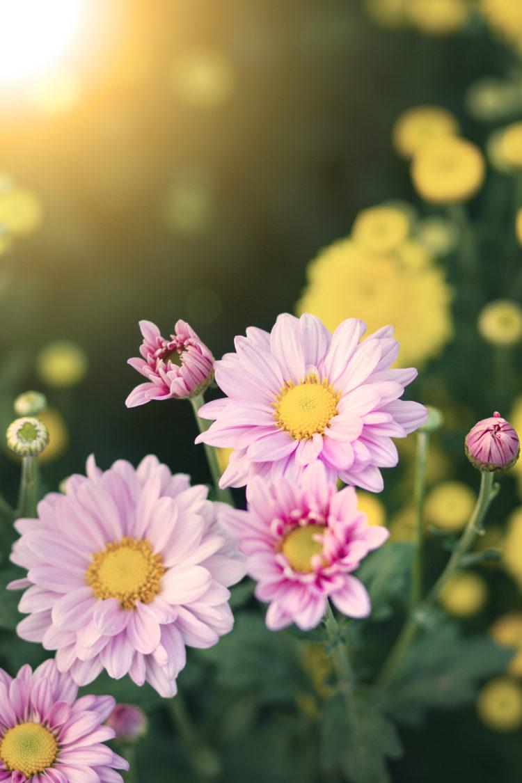 Beautiful flowers in a garden