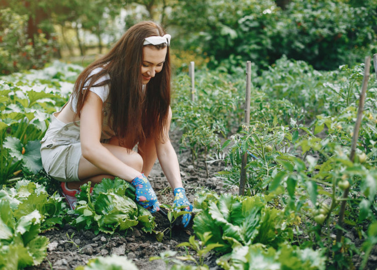 Woman works in a garden. Lady in a blue gloves